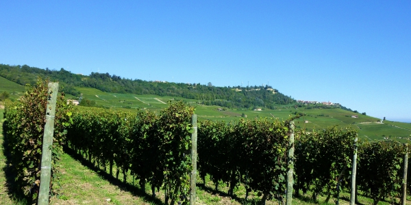 Barolo vineyards in Cuneo, Piedmont